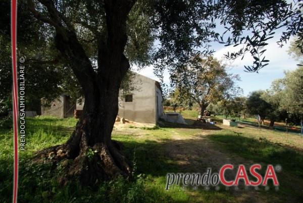 Rustico / Casale da ristrutturare in vendita Rif. 4233556
